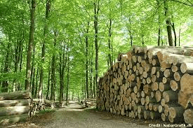 What is Sustainable Forestry?