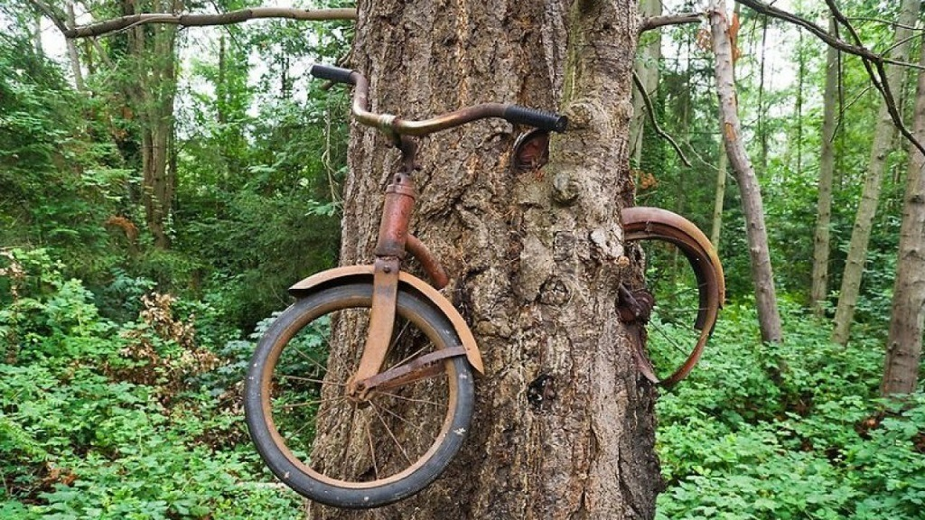 Island lost bicycle swallowed by a tree