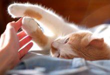 How to tell if cat still has kittens inside
