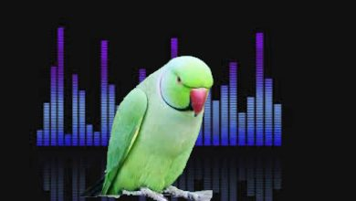 Why can parrots talk and not other animals